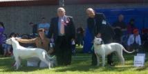 World Dog Show Herning 2010